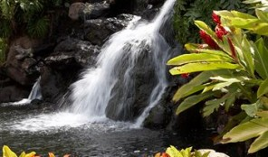Kaanapali Beach Club Waterfall