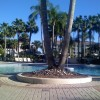 Sheraton Vistana Villages in Florida Pool