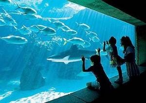 Harborside Resort at Atlantis Aquarium